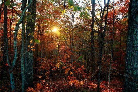 autumnal-trees